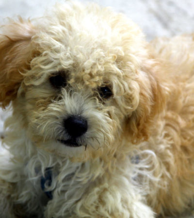 Piden autoridades reforzar cuidados de mascotas durante fiestas decembrinas, por uso de pirotecnia