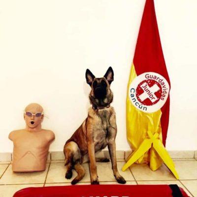 Encuentran a 'Nina', la perrita rescatista que se perdió durante 30 horas en Cancún