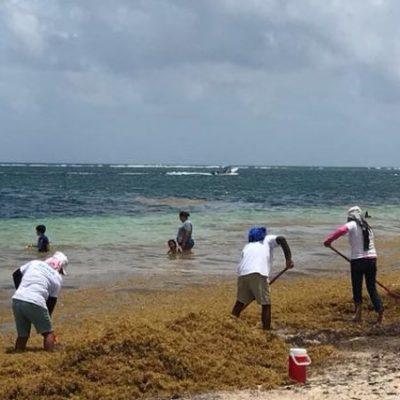 Empresarios urgen solución para el manejo del sargazo antes de que invada las costas de Cancún