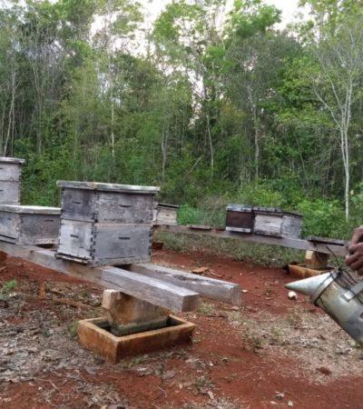 Escarabajo ya es dolor de cabeza para apicultores de Sabán