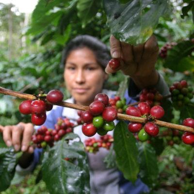 ACUSAN DESLEAL COMPETENCIA DE NESTLÉ: Exigen subsidio cafetaleros de Chiapas, Oaxaca, Guerrero y Veracruz