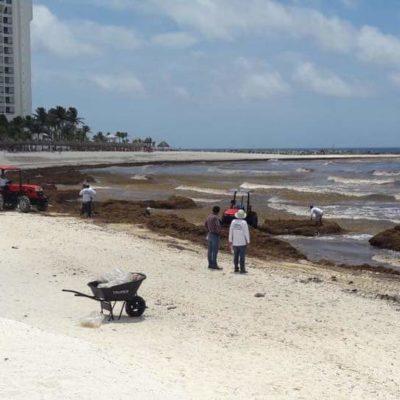Reunión mundial antisargazo será en Cancún el 1° de marzo