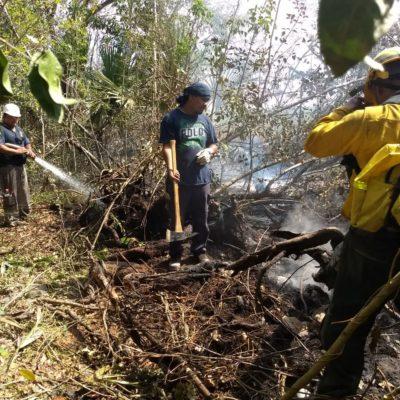La Coordinación de Protección Civil de QR prepara comités contra incendios forestales