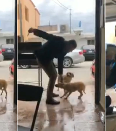 VIDEO | Apuñala sujeto a un perro en Piedras Negras; alcalde promete aplicarle la Ley