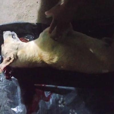 No hay denuncia por perro asesinado en Calderitas, asegura la Profepa