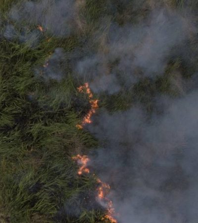 Incendian controladamente humedal de Chiapas para observar comportamiento del fuego