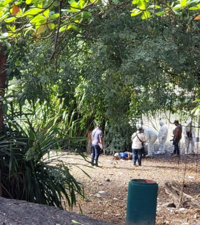 LE DIERON UN BALAZO EN LA CABEZA Y CAYÓ ENTRE MATORRALES: Matan a un hombre en el parque La Rehollada de Cancún
