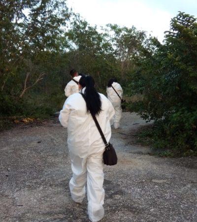 Hallan osamenta en un área verde del fraccionamiento Real Bahía en Cancún
