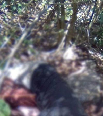 Cazador de venados mata a su propio compañero por un malentendido en Yucatán