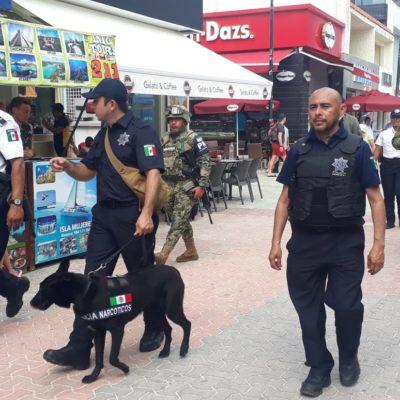 TRES DETENIDOS EN EL PRIMER RECORRIDO: Unidades caninas dan resultados desde su estreno en Playa del Carmen