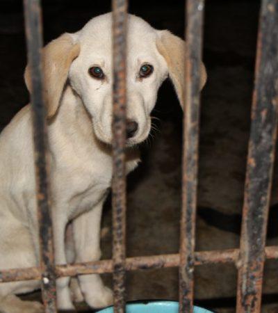 El maltrato animal quedará tipificado como delito en QR, en cuanto diputados locales aprueben las reformas a la Ley de Bienestar Animal