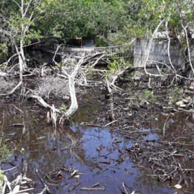 Devastan manglar en el complejo turístico de Puerto Aventuras; acusan a inspectores del Ayuntamiento de encubrir el ecocidio