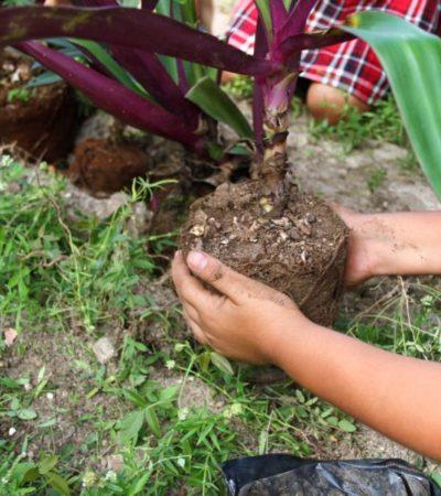 Gobierno de Puerto Morelos establece políticas públicas a favor del medio ambiente