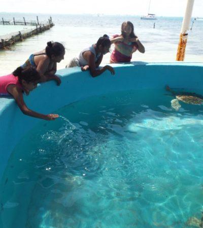 Disminuye la liberación de tortugas en la Tortugranja de Isla Mujeres, donde se reporta el deterioro de las instalaciones y la manipulación de ejemplares