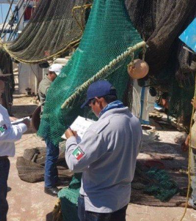 Certifica EU redes de camaroneros campechanos; evitan lastimar tortugas y podrán exportar al país vecino