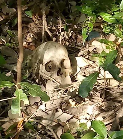 Encuentran cráneo humano en área verde de Chetumal