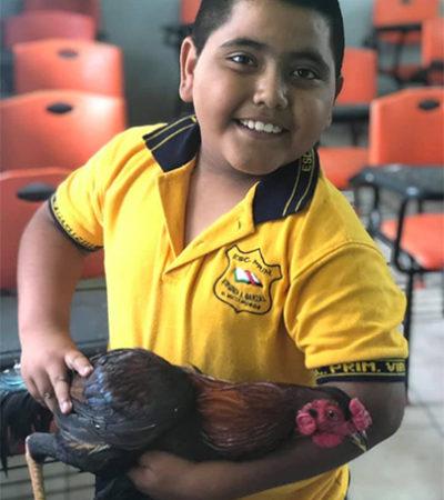 Lleva niño un gallito a su maestra porque no tenía dinero para comprarle un regalo de cumpleaños