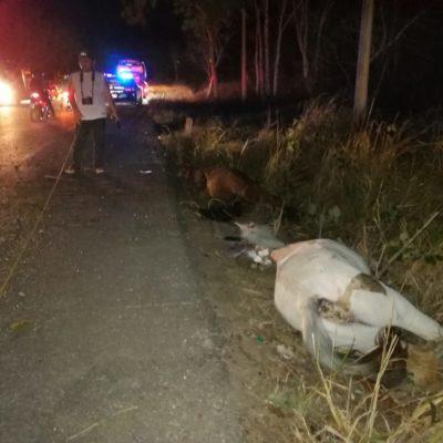 Aparatoso accidente en Morelos: mueren dos caballos