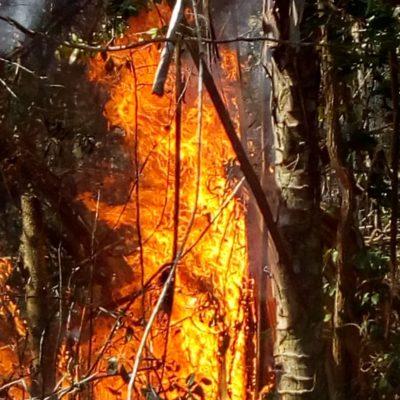 Segundo incendio forestal en la colonia Cristal de Tulum