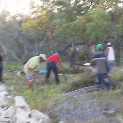 Denuncian invasión y destrucción de mangle en Holbox