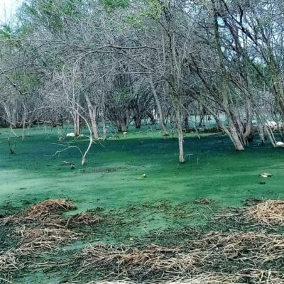 "Interponen ""denuncia popular"" en Yucatán contra empresa porcícola por estragos ecológicos"