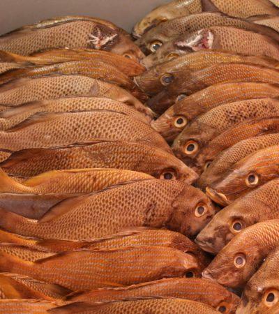 Desciende producción pesquera en Cozumel