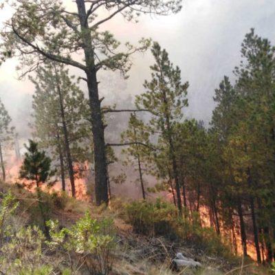 Evacuan a 2 mil personas por incendio forestal en el municipio de Las Vigas, Veracruz