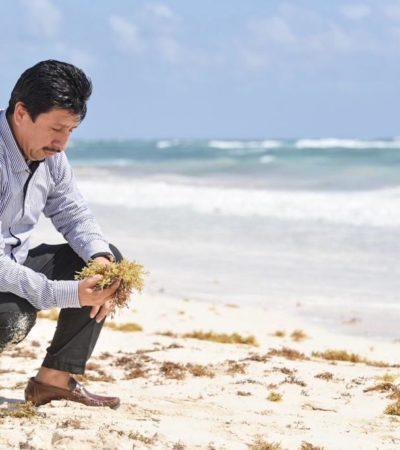 En la lucha contra el sargazo, anuncia Alcalde apertura de dos nuevos depósitos para el alga marina en Tulum