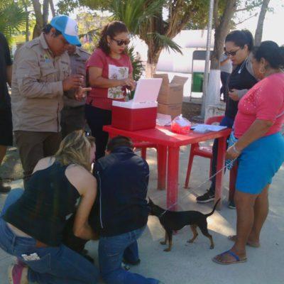 Inicia la Semana de Vacunación Antirrábica 2019 en Tulum