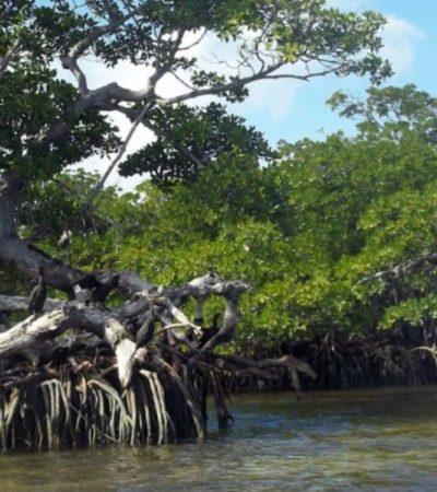 """""""Si se acaba con los humedales, se acabará el turismo y habrá una pérdida económica en QR"""", advierten ambientalistas en el Día Mundial del Agua"""
