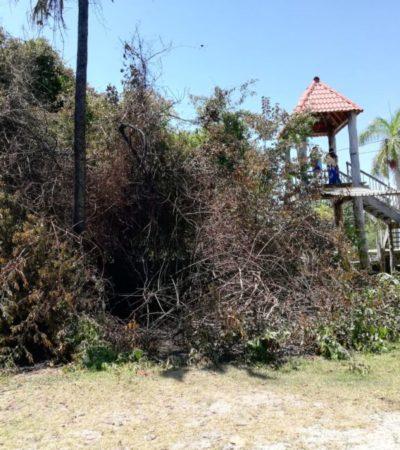 Grupo de vándalos provoca incendio zona de manglar, en Chetumal