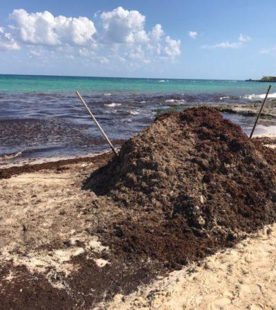 Hoteleros de la Riviera Maya podrían utilizar el sargazo para generar gas