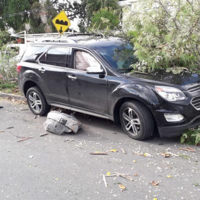 BORRACHAZO EN CHETUMAL: Destruye conductor árboles con su camioneta en la colonia Benito Juárez | FOTOS