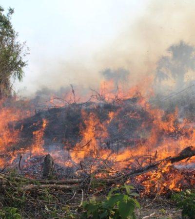 La Conafor atiende incendios forestales registrados en los municipios de Bacalar y Othón P. Blanco