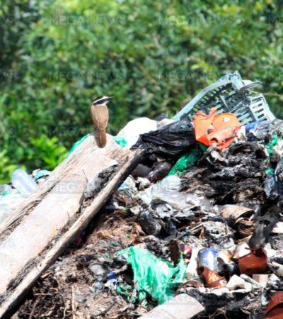 Encuentran cuerpo de joven calcinado en el basurero de Nicolás Bravo