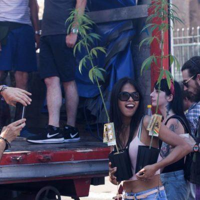Pugnan por 'uso cultural' de la mariguana; exigen al Senado legislar despenalización
