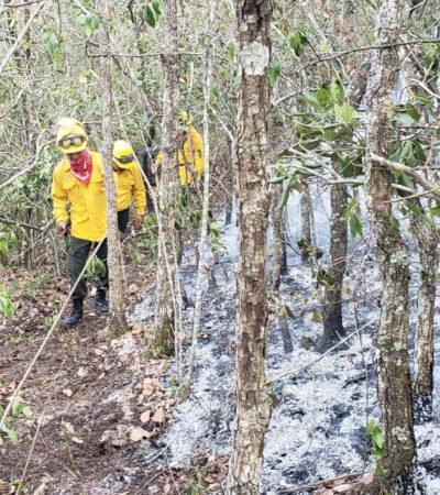 RECUENTO DE LOS DAÑOS: Más de 8 mil hectáreas afectadas por 994 incendios en Chiapas