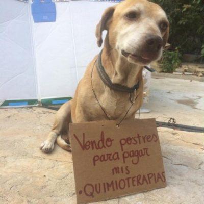 DEKO, UN PERRO CON SUERTE: Joven vende postres para pagar quimioterapia de su mascota en Campeche