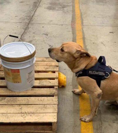 Hallan 19 kilos de éxtasis en cubeta de supuesta miel de abeja enviada de Campeche a Yucatán; su destino final sería Guadalajara