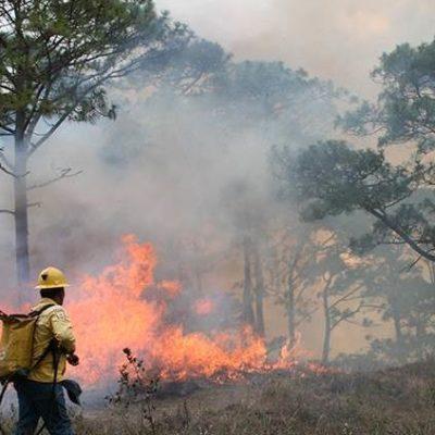Piden brigadistas equipo especial para atender incendio en Reserva de la Bisofera 'El Triunfo' en Chiapas
