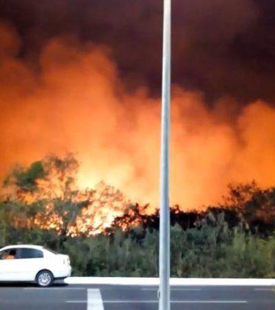 Arrasa el fuego con 200 hectáreas de manglares en Campeche; aún luchan por sofocarlo