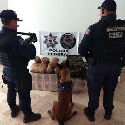 INTERCEPTAN CARGAMENTO PARA LA 'FIESTA': Hallan 32 kilos de marihuana en paquetería de Cancún