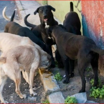 Propone diputada de Morena en Puebla 'eliminar' perros callejeros por molestos y riesgosos