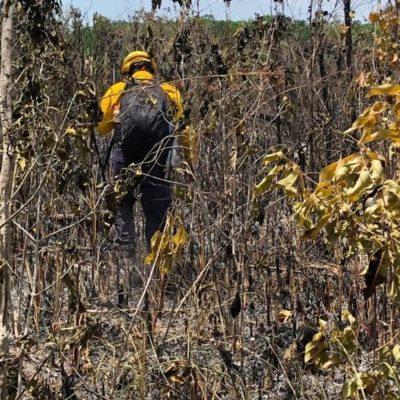 Tardará cinco años en recuperarse la zona del incendio en el área 'Los Petenes' de Campeche