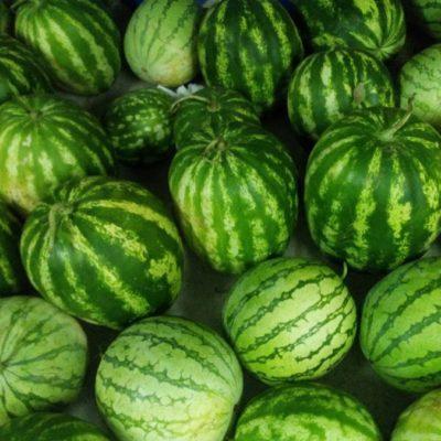 Inicia el primer corte de sandía de la temporada en Puerto Arturo; la fruta será exportada a Guadalajara, Monterrey, Guanajuato y Puebla