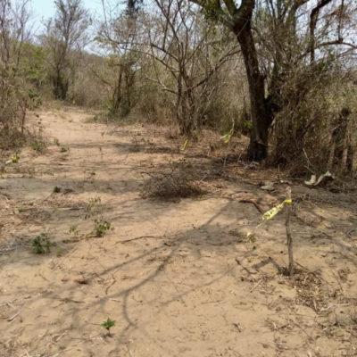 Hallan 36 fosas clandestinas en Veracruz; cada una contendría al menos un cadáver