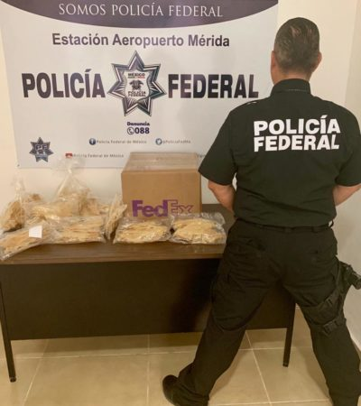 Aseguran casi 3 kilos de aparente buche de totoaba en el Aeropuerto de Mérida