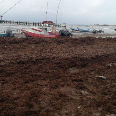 Sargazo y lluvias afectan ocupación turística en playas de Solidaridad