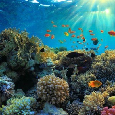 Anuncia millonario suizo donación de 1000 mdd para luchar contra el cambio climático y salvar ecosistemas como los arrecifes del Caribe