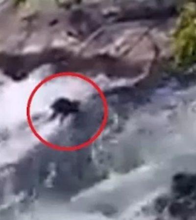 VIDEO | Tira sujeto a dos perritos a río en los Tuxtlas, Veracruz, y mueren ahogados